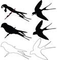 swallows collection - vector image