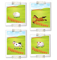 Four photos of animals vector image vector image