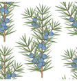 Seamless pattern with a sprig of juniper vector image