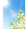 flowering cherry on background blue sky vector image vector image