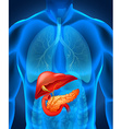 Pancreas cancer in human body vector image vector image