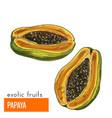 papaya color vector image vector image