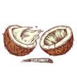 sketch coconut fruit coconut milk splash vector image vector image