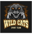 Wild cats sport team - logotype emblem vector image vector image