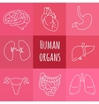 icons of human organs vector image