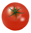big ripe red fresh tomato with parsley isolated on vector image vector image