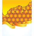 bright honey background vector image vector image