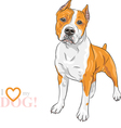 dog American Staffordshire Terrier vector image vector image