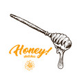 honey sketch spoon honey hand drawn superfood vector image