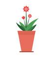 mandevilla plant in brown pot vector image vector image