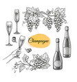 champagne big set vector image