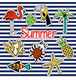 background with summer set of isolated cute vector image vector image