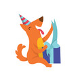 cute dog in party hat sitting on the floor with a vector image vector image