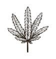 hand drawn medical marijuana leaf vector image vector image