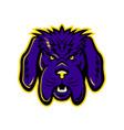 newfoundland dog mascot angry vector image