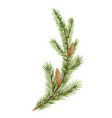 watercolor green spruce branch with cones vector image vector image