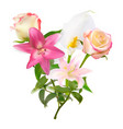 with pink lily calla and vector image vector image