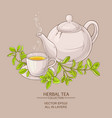 cup of marjoram tea and teapot vector image vector image