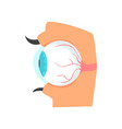 eyeball anatomy of human eye cartoon vector image vector image