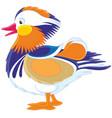 motley mandarin duck vector image vector image