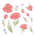 set red poppies and daisies hand drawing vector image vector image
