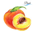 Watercolor peach vector image vector image