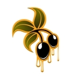 Olive branch with black fruits and drops vector image
