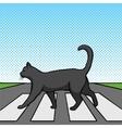 Black cat crossing road pop art style vector image