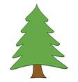 Pine Tree vector image vector image