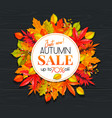 seasonal autumn banner vector image vector image