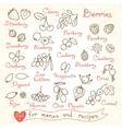 Set drawings of berries for design menus recipes vector image