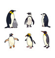 set of different penguins vector image vector image
