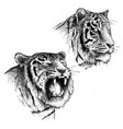 head of angry and calm tiger vector image