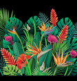 background with tropical with jungle plants on vector image vector image