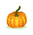 flat icon of large orange-yellow pumpkin vector image