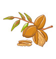 pecan leaves icon cartoon style vector image