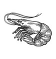 shrimp sea animal engraving vector image vector image