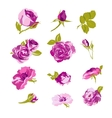 Set of floral design elements flower collection vector image