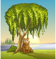 A bear under a big tree vector image vector image