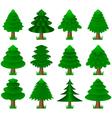 conifers coniferous trees vector image