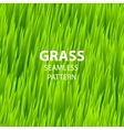 Green grass seamless pattern vector image
