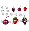 Cartoon cherry strawberry and blackberry vector image vector image