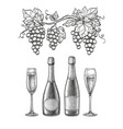 champagne ink sketch set vector image vector image