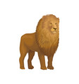 lion wild african animal