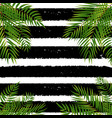 beautifil palm tree leaf silhouette backgroun vector image