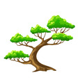 cartoon vector tree bansai with white background vector image