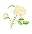 decorative element with yellow roses beautiful vector image vector image