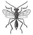 embolimus wasp vintage vector image vector image