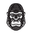 gorilla ape head on white background design vector image