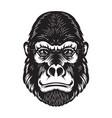 gorilla ape head on white background design vector image vector image